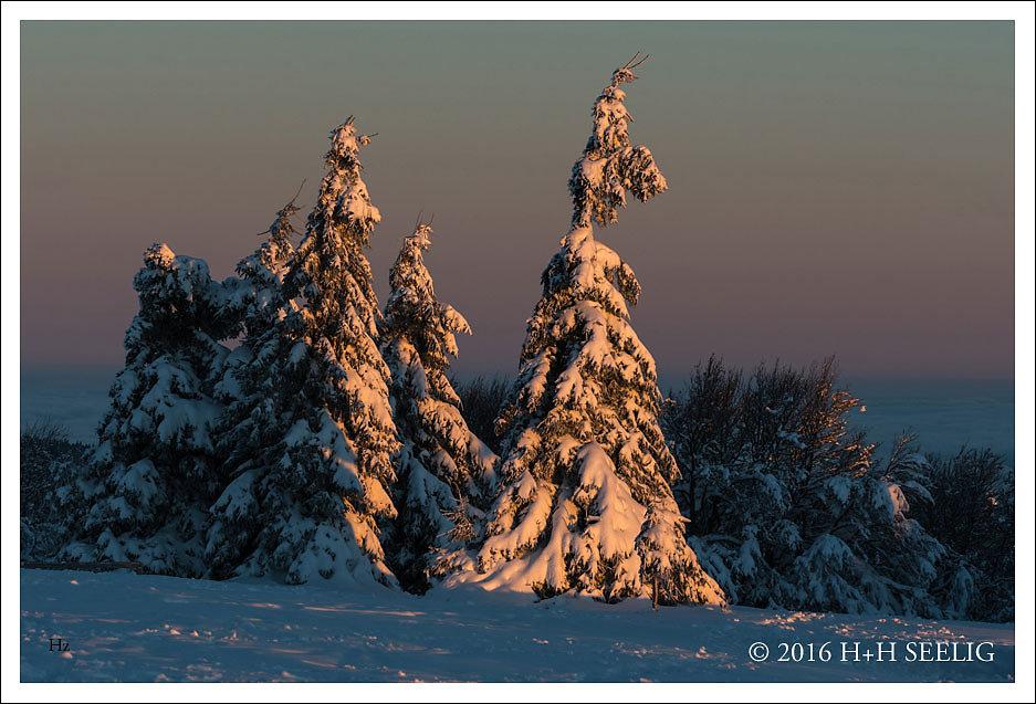 Früher Winter in den Vogesen