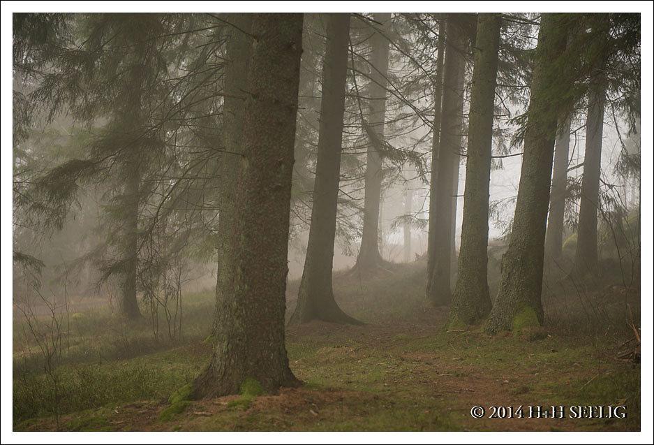 Nebelstimmung im Nadelwald