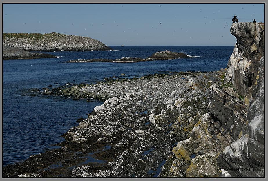 Vogelinsel Hornoya