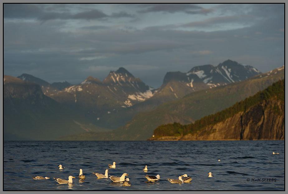 Abendstimmung am Romsdalfjord