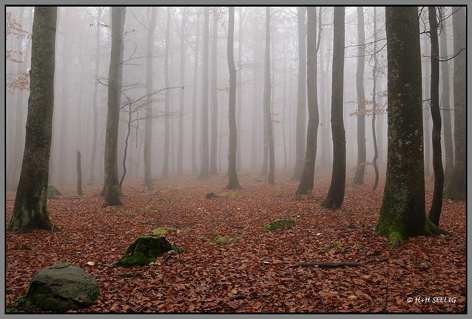 Bayerischer Wald Oktober 2009