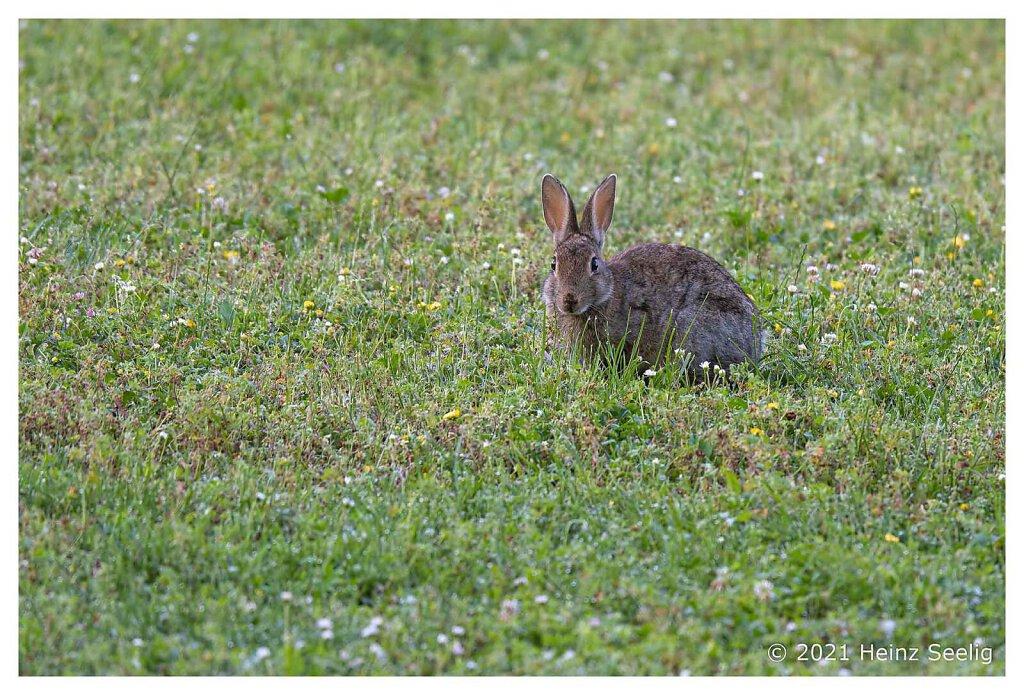 Kaninchen im Park